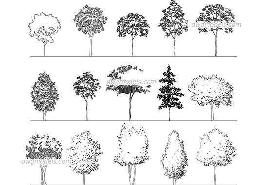 Elevation of Deciduous Trees dwg, cad file download free
